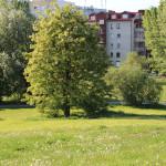okolice parku Górczewska