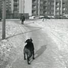 Klemensiewicza - lata 80.